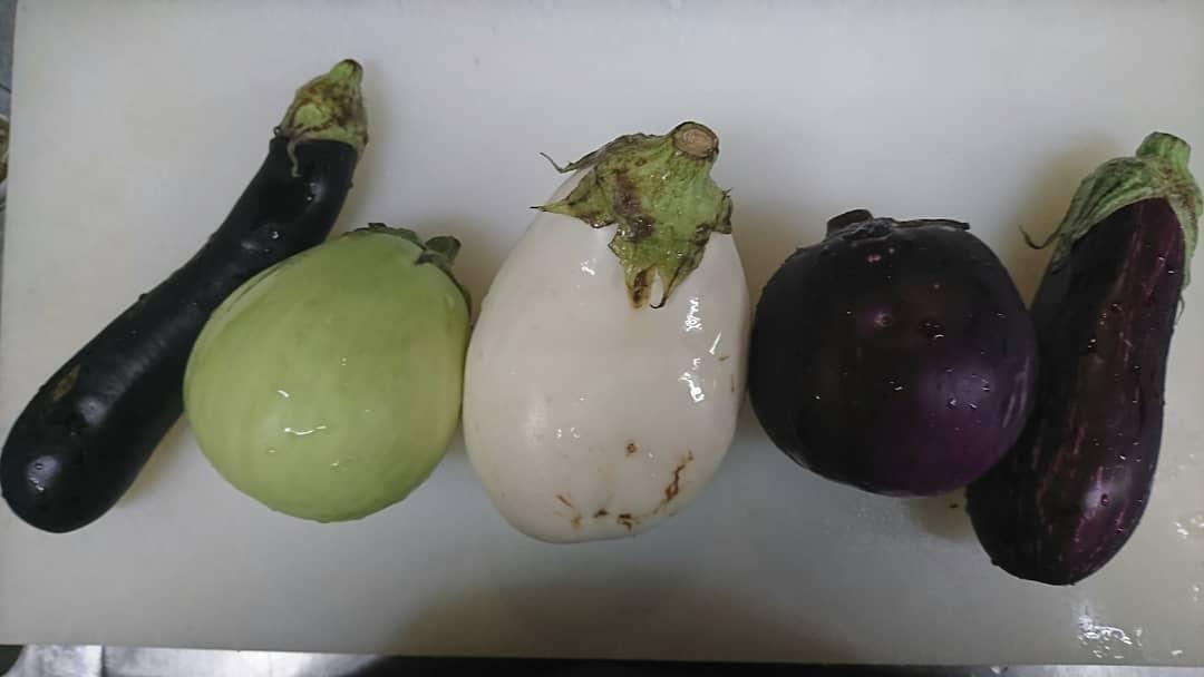 今日のおすすめは 四川風  色とりどりの麻婆茄子  深谷産の新鮮野菜♪ 左から  ルンガ 白ナス 揚げてトルコ プロスペローザ ゼブラ  を使って麻婆茄子作りました♪  食感の違うナスを楽しみながら召し上がりください♪  #営業♪