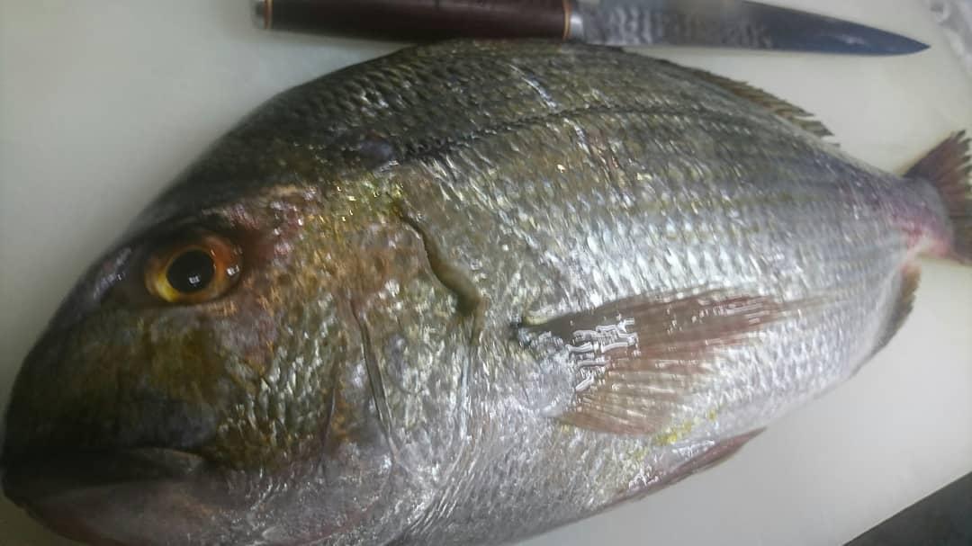 今日のお魚♪  平鯛(へだい)  秋から春くらいまでの脂ののった成魚の刺身はとても美味♪ 血合いが美しく舌触りがねっとりとして甘味がある。バランスのいい味わいで後味もいい。  美味しいですよ~ 是非!  TO イート