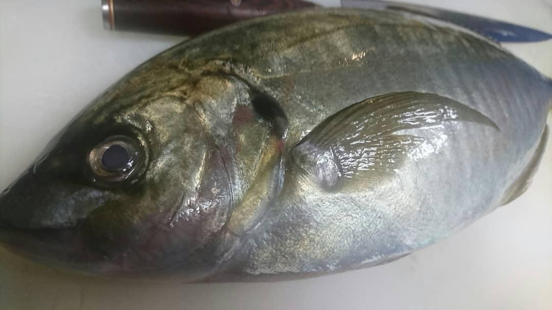 今日のお魚さん♪  縞アジ♪  白身と背の青い魚の中間にある、双方のよいところを持っている。特に天然物は大型のアジ類の中でももっとも後味がいいです。  脂のりも良好なので是非~  テイクアウトも継続して やっております!  ※感染拡大防止の為  営業時間を変更する場合があります。 (閉店後、店全体のアルコール消毒をする為)  ご協力・ご理解 宜しくお願い致します!  TO イート